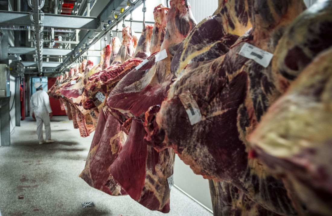 Pointé du doigt par Animal Rights, l'abattoir d'Izegem fermé