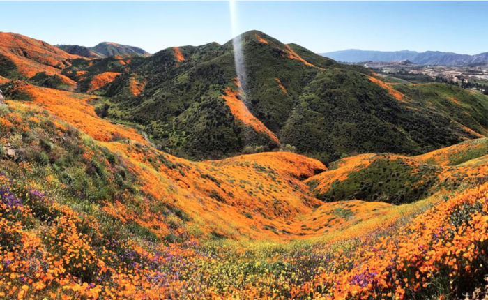 super bloom californie