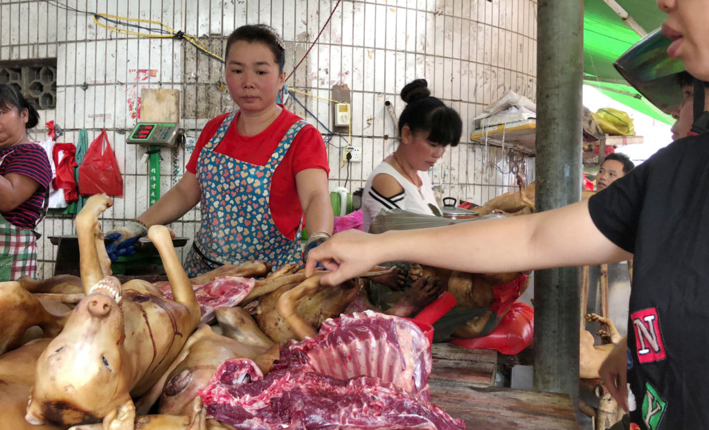 Chine Yulin chiens