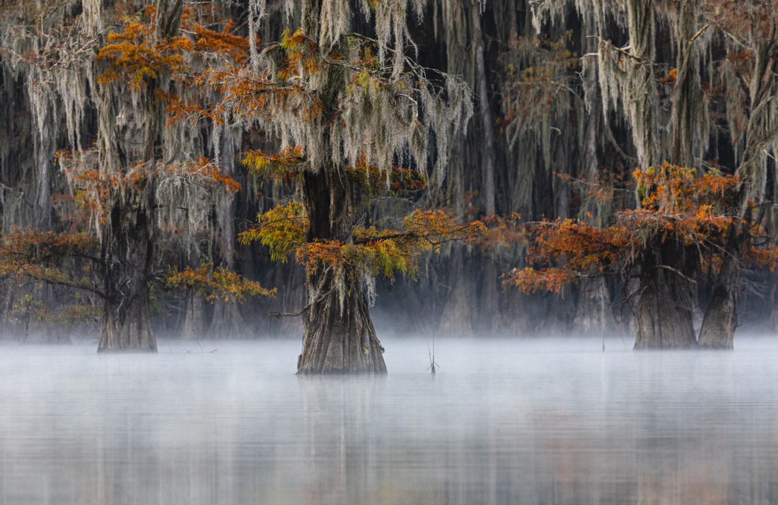 Texas Cypress Swamps