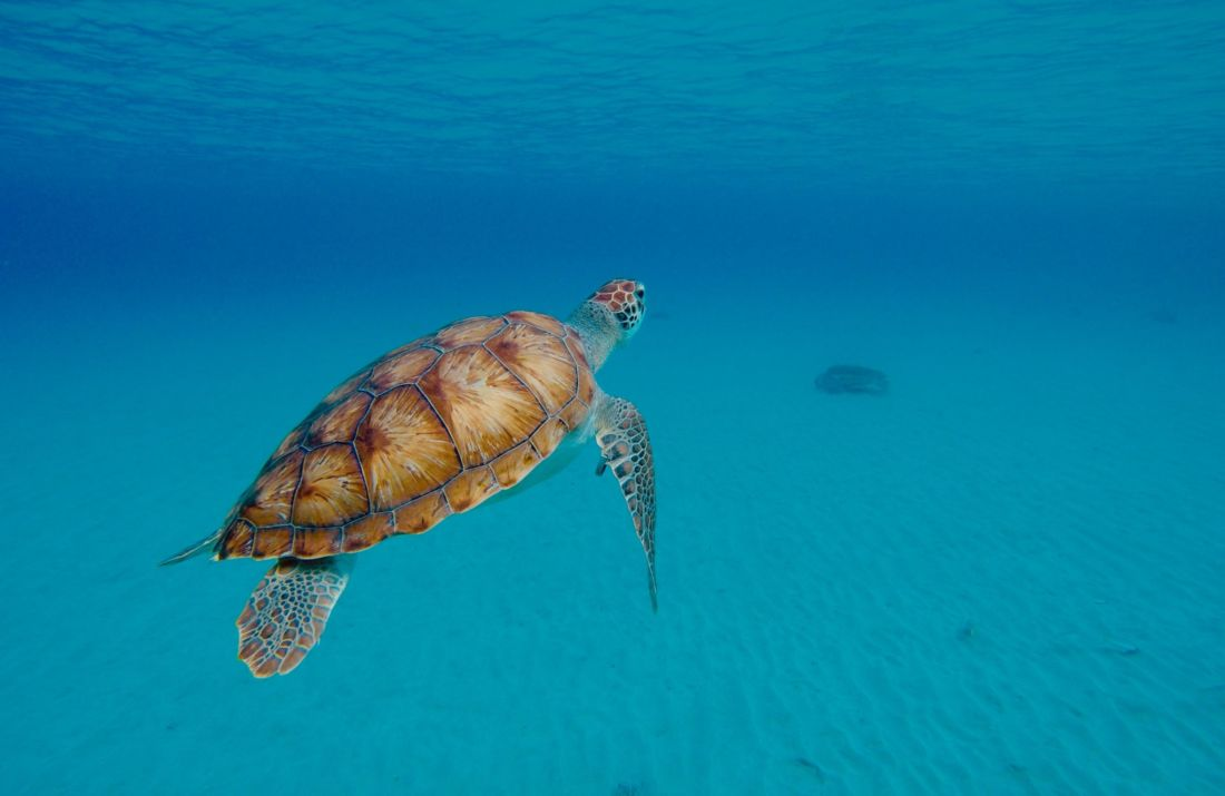 tortues corse